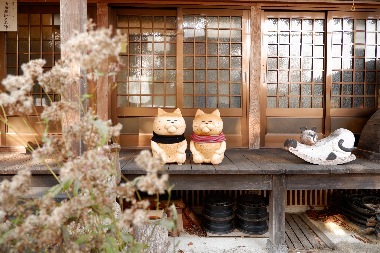 萩の猫寺「雲林寺」でねんぴ~にゃんこ~りき!